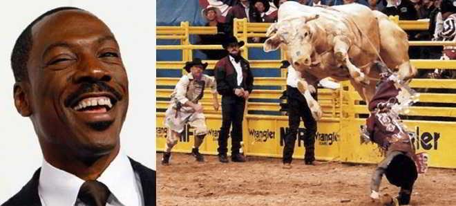 Eddie Murphy vai desenvolver e produzir filme sobre o touro 'Bodacious'