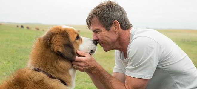 'A Dog's Purpose': Trailer da comédia dramática de Lasse Hallstrom
