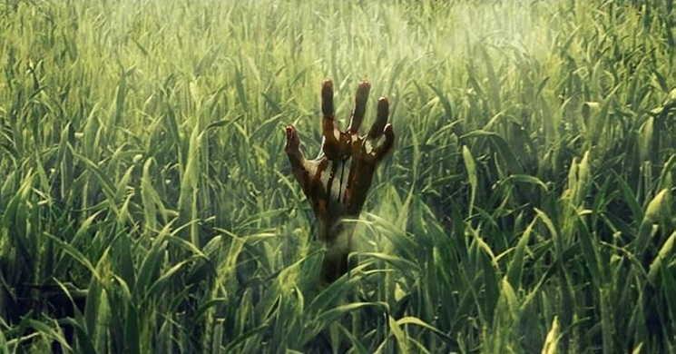 Trailer portugues do filme In the Tall Grass
