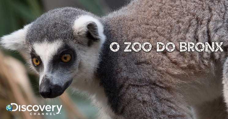 Discovery estreia temporada 3 de O Zoo do Bronx