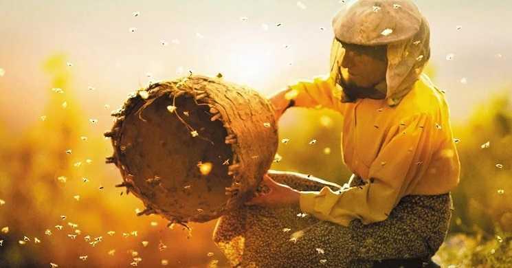 Trailer português do filme Honeyland: A Terra do Mel