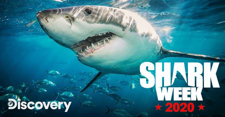 Shark Week 2020 no canal Discovery
