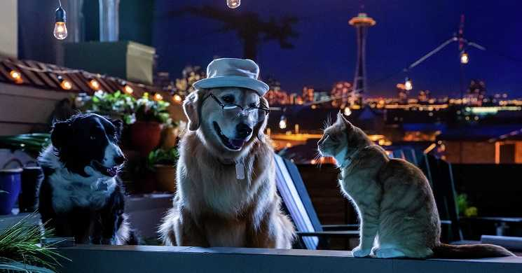 CATS & DOGS 3: PAWS UNITE (2020) - Trailer oficial