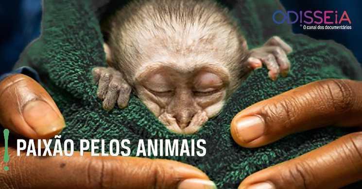Canal Odisseia estreia especial Paixao pelos Animais