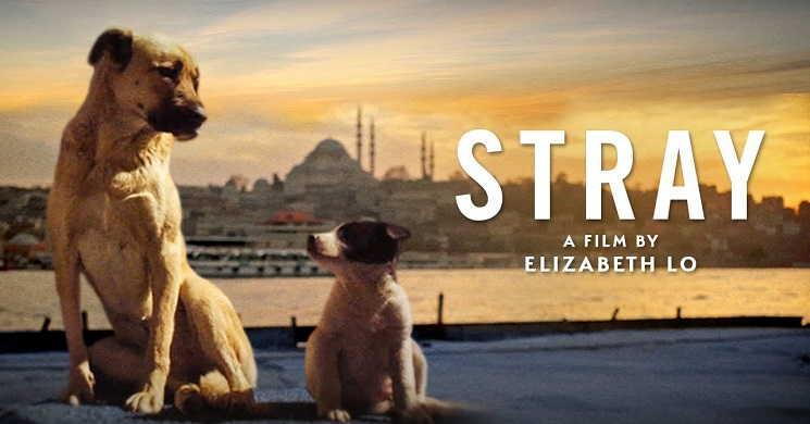 STRAY - Trailer oficial